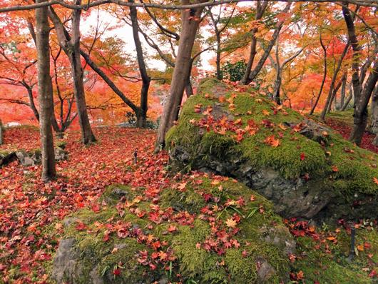 苔むした岩、The mossy rock and autumnal color of leaves